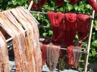 Yarn Hanging to Dry after Dyeing