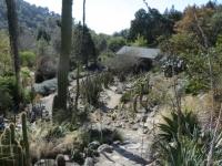 Cactus Garden Berkeley Botanical Garden