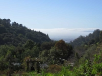 View from Berkeley Botanical Garden