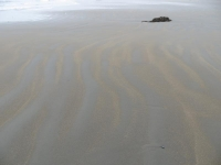 Ripples of Sand and Kelp