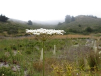 White Flower View