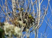 Bird nest at Berkeley Botanical Garden